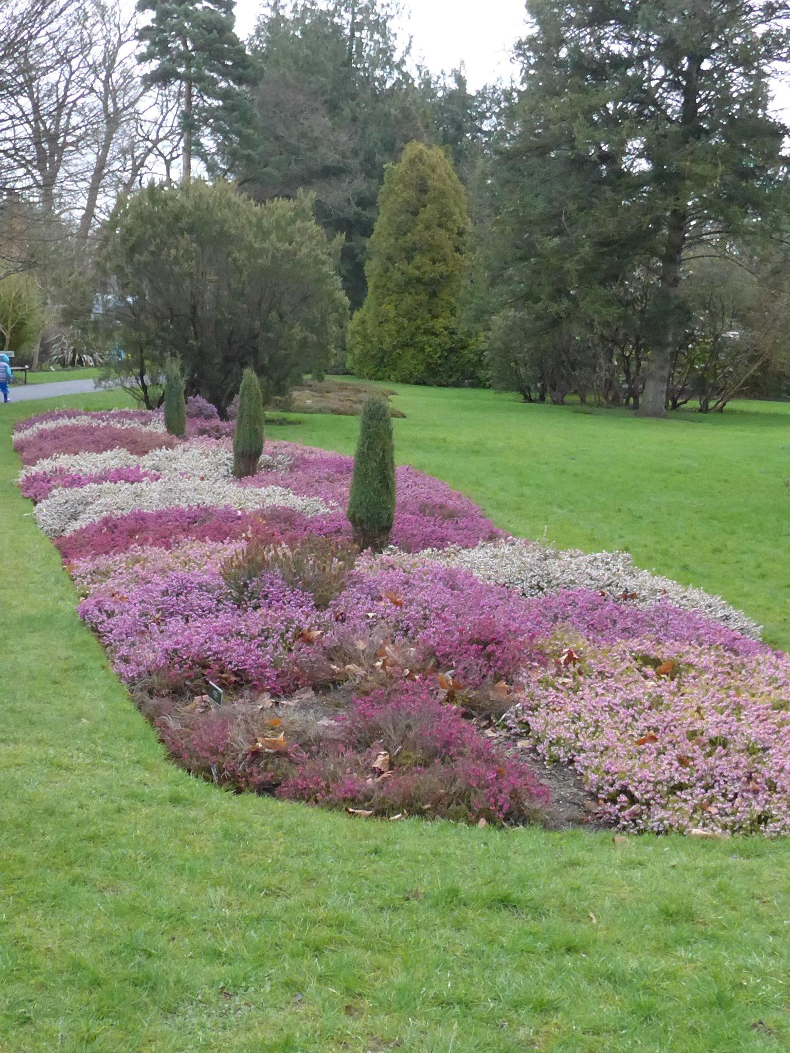 Jardin botanique à Dublin